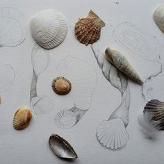 Need inspiration? Browse through this gallery of creative projects by our talented community of designer and crafters — and add your own. Sea Shells, Spoons, Projects, Inspiration, Design, Quote, Biblical Inspiration, Blue Prints, Seashells