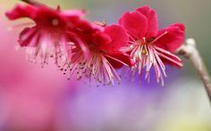 branch spring flowers pink