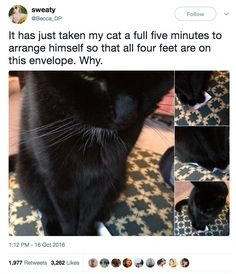 Cute Adorable Kittens Gif other Cute Black Kitten Memes beyond Best Cute Animals Pictures outside Cute Cartoon Animals To Draw, Cute Kitten Videos Tickle Funny Animal Memes, Cute Funny Animals, Cat Memes, Funny Cute, Cute Cats, Funny Memes, Hilarious, Animal Puns, Adorable Kittens