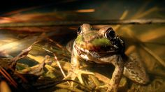 A chilly frog. March 8 in Western New York. 35 degrees. Mix of rain and snow. Welcome back, my friends.