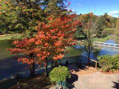 Fall @trilliumtrails Trail, Plants, Wedding, Mariage, Weddings, Plant, Marriage, Casamento, Planting