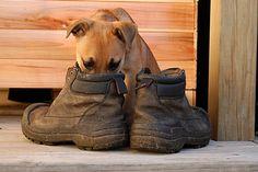 Ayakkabı Kokusundan Kurtulmanın İlginç Yolunu Öğrenmek için Tıklayın! #pratikbilgiler #püfnoktaları #hayatkolay #püfnoktası #faydalıbilgiler