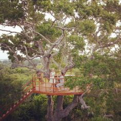 """The Sanctuary Yala on Instagram: """"Our epic treehouse has a romantic effect on people! Why not say 'I DO' and come and share the love at The Sanctuary Yala on a safari…"""" Share The Love, Treehouse, Safari, Romantic, House Styles, People, Instagram, Tree Houses, Romance Movies"""