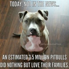I love pitbulls. My puppy pitbull is so loving and adorable and would NEVER try to hurt anybody unless he was defending his family which is what dogs are supposed to do love and protect their families