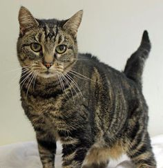 Pet of the week: Chatty Cathy
