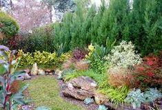 Resultado de imagen para plantas para un pequeño jardín