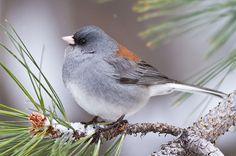 birds photography - Pesquisa Google