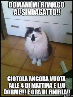Immagini divertenti, foto, barzellette, video, immagini whatsapp divertenti e frasi. Ogni giorno nuovi contenuti freschi. Vedere. Tante immagini divertenti, barzellette e umoristiche per voi., Animals And Pets, Funny Animals, Cute Animals, Fanny Photos, Italian Memes, Serious Quotes, Try Not To Laugh, Love Pet, Cat Memes