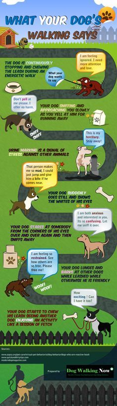 We thought this infographic was really interesting! Had you ever wondered what your dog might be trying to tell you while you are out on your walks? Now you can know!