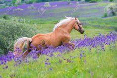 caballos con flores - Buscar con Google