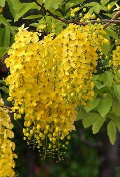 Gardening Hacks That Anyone Can Use Flora Flowers, Flowers Nature, Tropical Flowers, Yellow Flowers, Colorful Flowers, Yellow Plants, Orchid Plants, Most Beautiful Gardens, Beautiful Flowers