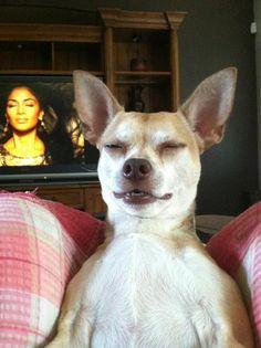 And this dog imitating Nicole Scherzinger.