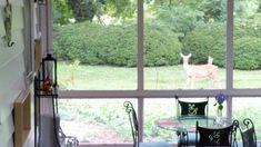 Happy to be offering habitat for many creatures.  Deer haven't eaten anything that mattered;  too much to choose from! #wildlifehabitat B & B, Habitats, Deer, Heaven, Creatures, Happy, Sky, Heavens, Ser Feliz