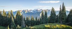 The purpose of this article is less aimed at sharing a personal tale and is rather designed to provide a quick glimpse into each National Park contained within the Lower 48 states.