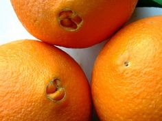 How to Take Care of a Navel Orange Tree in Florida