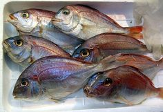 Fish is richly endowed with essential nutrients which keep our health in perfect shape.
