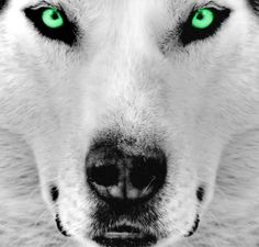 Wolf Spirit - A power animal symbolic of freedom. The wolf totem is a reminder to keep your spirit alive and trust your instincts to find the way that will best suit you.