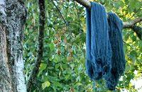 Odla vedje - färga blåanyanser/ indigo