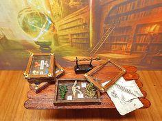 Il Collezionista  3  Miniatura teca Erbario Natura di PiccoliSpazi