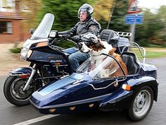 dog in motorcycle trailer - Saferbrowser Yahoo Image Search Results Scooter Custom, Motorcycle Trailer, Concept Motorcycles, St Bernard Dogs, Scooter Motorcycle, Pet News, Funny Dog Pictures, Electric Scooter, Motor Car