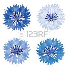 bleuet: Flower set bleuet isolé Summer meadow fleurs vecteur de collecte
