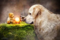 The Amazing Adventures of a Dog and His Best Friend Teddy Captured in Breathtaking Photos