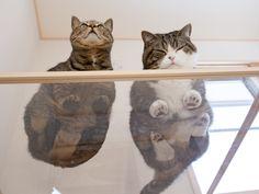 Les photos de chatons dans une chaussette de Noël ou enroulés dans une pelote de laine c'est dépassé...