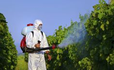 Agrotóxicos: Conheça o 'tempero' mais usado por brasileiros que pode matar a sua família - http://controversia.com.br/15920