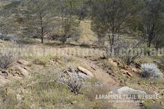Track Cam: Typical trail surroundings along Section Larapinta Trail. © Explorers Australia Pty Ltd 2013 Trail, Gap, Country Roads, Australia, Outdoor, Outdoors, Outdoor Living, Garden
