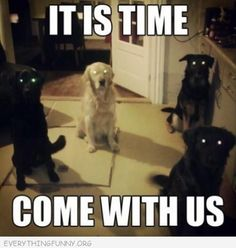 funny caption dogs look possessed it is time come with us