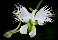 cool-flowers-animals-white-egret-orchid