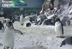 Pingi-Webcam!!!