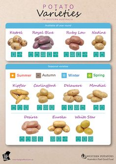 Which Potato Varieties to Use for baking, frying, boiling, microwaving, and steaming