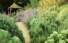 lavander, rosemary and sedum (what are the other lovely foliage plants???)