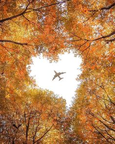 Love of Nature 💕 Saitama in Autumn 🍂 By Use for a feature Cool Pictures, Beautiful Pictures, Heart In Nature, Creation Photo, Autumn Scenes, Jolie Photo, Fall Photos, Nature Wallpaper, Animes Wallpapers