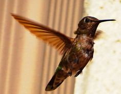 Stop By :http://cindyknoke.com/2014/04/22/look-who-came-to-call-on-the-hummingbirds-today/