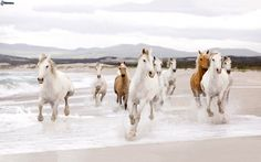 Don't you feel the freedom's.. smell?!  White horses. Nature's power. Sea.
