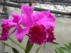 Orquídeas colombianas !!