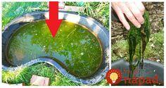 Perfektný tip, pre všetkých majiteľov záhradných jazierok, ktorý hľadajú možnosti, ako udržať vodu v jazierku čistú bez zbytočných chemikálií, čo najdlhšie a tak, aby neublížili rybkám a iným živočíchom, ktoré v rybníku žijú. Water Garden, Gardening, Chemistry, Lawn And Garden, Water Gardens, Horticulture