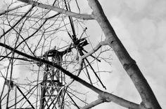 nur ein bild {45} Utility Pole, Nature, Pictures