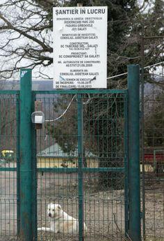 Consiliul Judeţului, obligat să desfiinţeze adăpostul pentru maidanezi construit ilegal în pădurea Gârboavele
