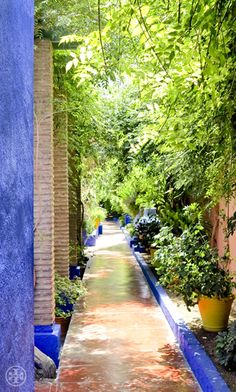YSL's Majorelle Gardens. Photograph by Noa Griffel.