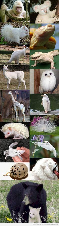 Albino animals....we have an albino aquatic frog...already had him for 7 years.....he's kinda' creepy & cool, all @ the same time!?!...