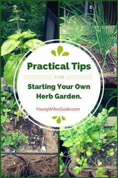 resh herbs have also transformed my cooking by giving me a variety of flavors to work with and figure out how to use. There are numerous ways to use your herbs and having a little herb garden is a lot easier than you may think.