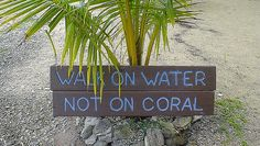 Walk on water. Hawaian Islands, Beachy Quotes, Beachy Signs, Walk On Water, Beautiful Disaster, Beach Shack, Great Vacations, Big Island, Palm Trees