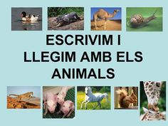 Publishing platform for digital magazines, interactive publications and online catalogs. Title: ESCRIURE I LLEGIR FRASES AMB ELS ANIMALS, Author: Length: 56 pages, Published: Zoo Animals, Cute Animals, Book Worms, Presentation, Language, Author, Teaching, Activities, Education