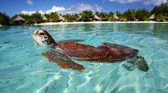 tropical travel pictures - Google Search