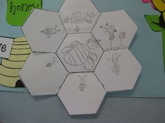 Classroom Fun: Bees, fold-up hexagon