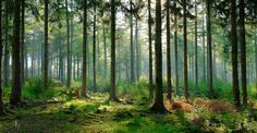 weknowyourdreams.com image.php?pic= images forest forest-07.jpg