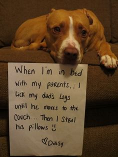 When I sleep in bed with my parents I lick my dad's leg until he moves to the couch…then I steal his pillows! ~Daisy